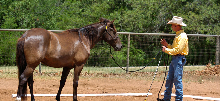 Starting an unbroken horse
